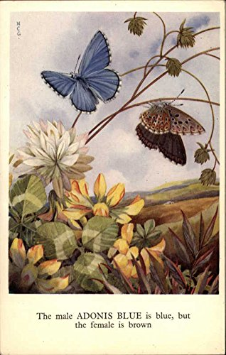 Birds and Butterflies Series - Adonis Blue Other Animals Original Vintage Postcard from CardCow Vintage Postcards
