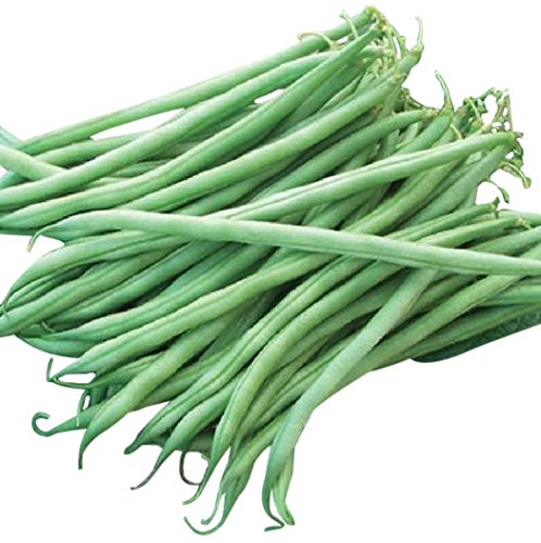 (Tenderette Stringless Green Beans - Organic - Approximately 40 Seeds)