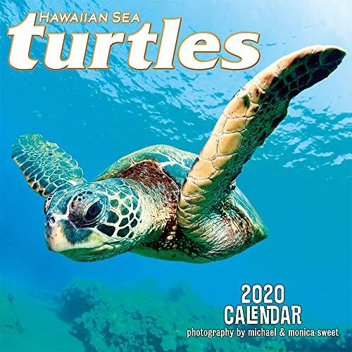 Pacifica Island Art - 2020 Wall Calendar - Hawaiian Sea Turtles by Michael & Monica Sweet