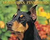 Just Doberman Pinschers Calendar (Just (Willow Creek))