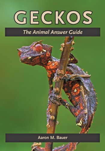 Geckos: The Animal Answer Guide (The Animal Answer Guides: Q&A for the Curious Naturalist)