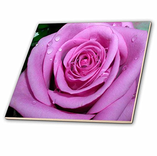 3dRose ct_1264_1 Ceramic Tile, 4-Inch, Purple Rose
