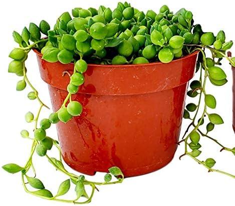 fat-plants-san-diego-succulent-plant
