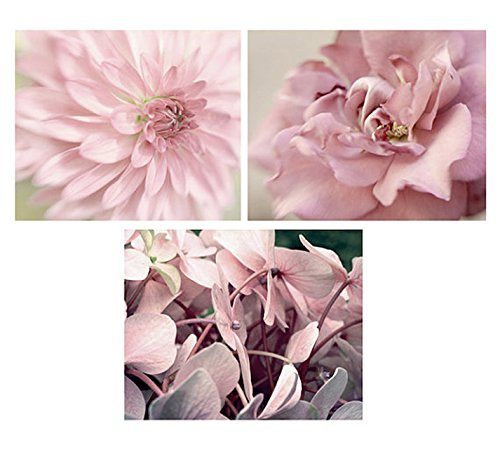 Amazon.com: Flower Photography Set of 3 Prints, Modern Art, Fine Art ...