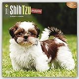 Shih Tzu Puppies 2016 Square 12x12