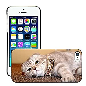 Super Stella Slim PC Hard Case Cover Skin Armor Shell Protection // M00144492 Cat House Comfort Animal Love // Apple iPhone 5 5S 5G