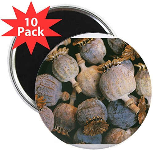 CafePress - Dried Opium Poppies - Magnets - 2.25