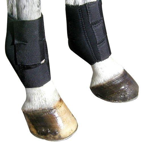 Intrepid International Nylon-lined Neoprene Ankle Boot
