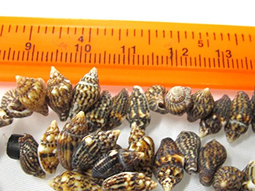 Nassa Tiger (25 Beads - Drilled natural small nassa shell beads - SP057s)