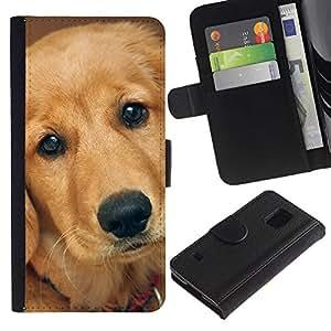 Stuss Case / Funda Carcasa PU de Cuero - Labrador Retriever Golden Dog - Samsung Galaxy S5 V SM-G900