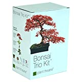 Plant Theatre Bonsai Trio Kit 3 Distinctive Bonsai Trees to Grow