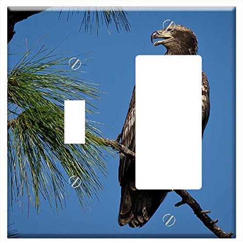 (1-Toggle 1-Rocker/GFCI Combination Wall Plate Cover - Bald Eagle Bird Juvenile Perched Nature)