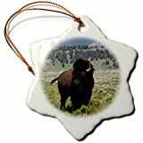 Ornaments to Paint Danita Delimont - Animal - Bison Bull, Yellowstone National Park - offers