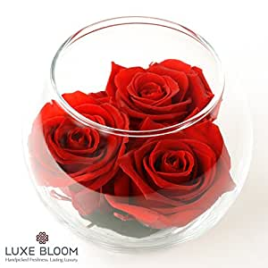 """Luxe Bloom 3 Fresh Cut Preserved Crimson Red Roses and Greens in 4"""" Glass Bubble Lasts 60 Days"""
