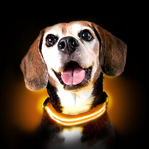 Ultimate LED Dog Collar – USB Rechargeable, cable included, 5 awesome colors. Ultra Bright, Durable, Made to last. Make your dog more visible at night. (Large, Orange)