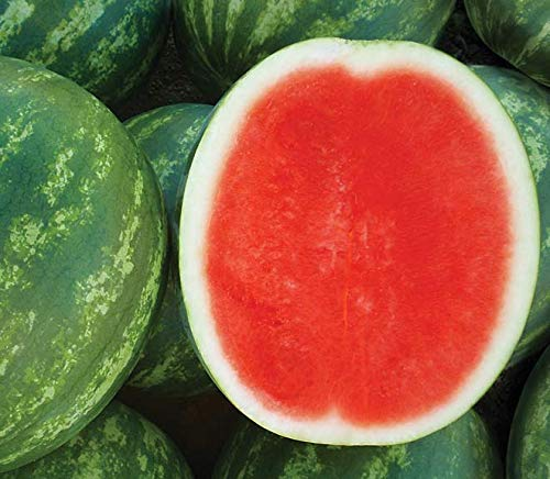 David's Garden Seeds Fruit Watermelon (Triploid) Chunky DS7461 (Red) 25 Hybrid Seeds by David's Garden Seeds