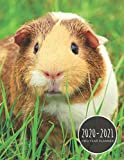 2020-2021 Two Year Planner: Guinea Pig Planner January 1, 2020 to December 31, 2021 Weekly & Monthly Planner + Calendar Views 2 Year Calendar 24 Month Agenda Planner Gift For Guinea  Pig Lovers