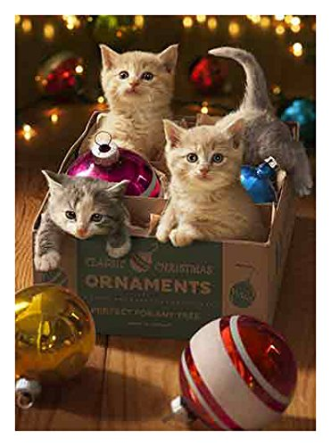 Avanti 10-Count Christmas Cards, Kittens in an Vintage Ornament Box
