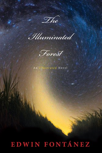 The Illuminated Forest