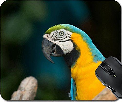 - MSD Mousepad Mouse Pads/Mat design 29718110 parrot bird sitting on the perch