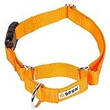 GoGo Pet Products GoGo 3/4-Inch Martingale Dog Collar, Medium, Orange