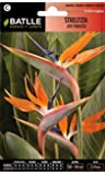 Semillas de Flores - Strelizia Ave del Paraiso - Batlle