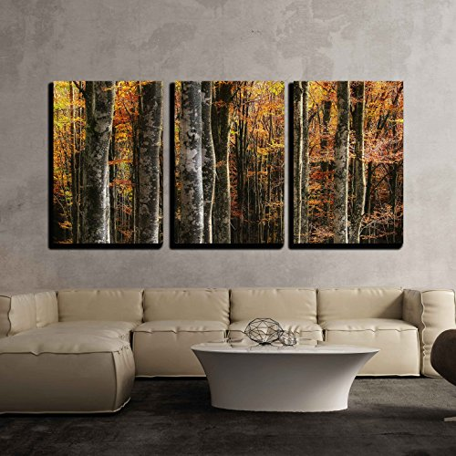 wall26 - 3 Piece Canvas Wall Art - Beech Trees in Autumn - Modern Home Decor Stretched and Framed Ready to Hang - 24