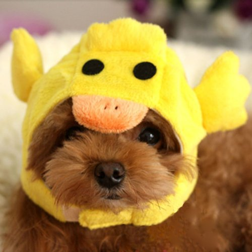 Alfie Pet by Petoga Couture – Qeno Duck Hat Party Costume (for Medium Dogs & Cats) – Color: Yellow, Size: Large