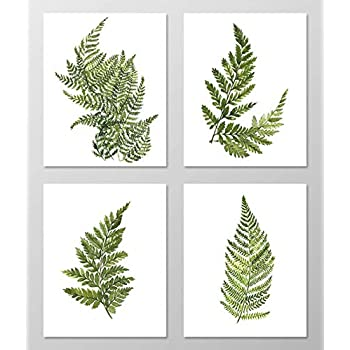 Fern art #A074 - Set of 4 art prints (8x10). Fern wall art.Fern picture.Botanical art.Botanical prints wall art. Nature art botanical.Painting.Nature art.Nature wall art.Green wall art.Green decor.