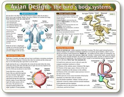 Kemah The Bird's Body Systems - A Double-Sided, UV Protected, Laminated Bird Anatomy Chart: A Learning and Teaching Chart for Veterinary Science Professionals, Veterninary Technicians, Bird Lovers by Kemah