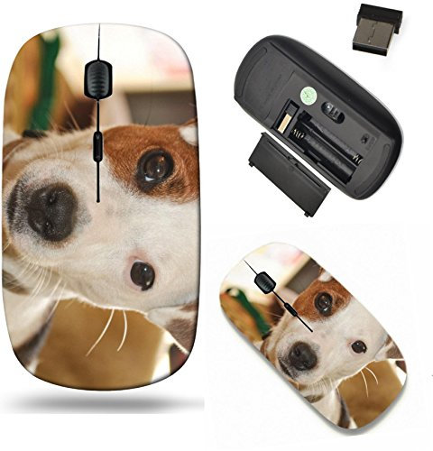Exp Receiver - Liili Wireless Mouse Travel 2.4G Wireless Mice with USB Receiver, Click with 1000 DPI for notebook, pc, laptop, computer, mac book Jack Russell Terrier dog up close sitting soft backlighting sweet exp
