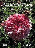 Klassische Rosen: Blütenträume für jeden Garten