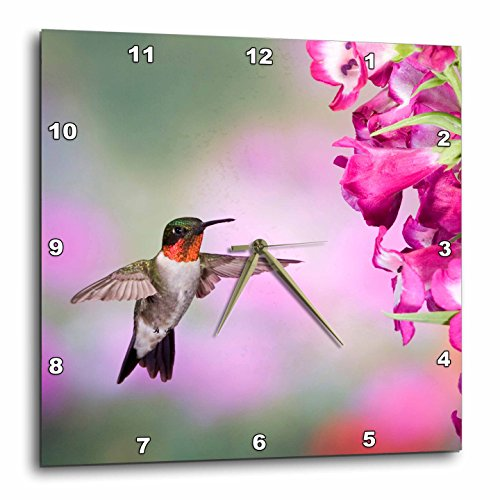 3dRose Illinois, USA - Ruby-Throated Hummingbird. - Wall Clock, 10 by 10