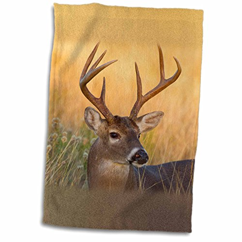 White Tailed Deer Gifts Kritters In The Mailbox White