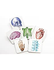 Colorful Medical Human Anatomy Coasters 3.75 inch square cork back skull brain hand anatomical heart