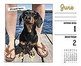 Crusoe the Celebrity Dachshund 2019 Box Calendar