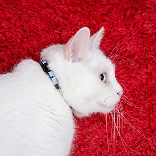 RYPET Reflective Cat Collar with Bell, Set of 12, Breakaway Cat Collar Identification Collars for Newborn Pets
