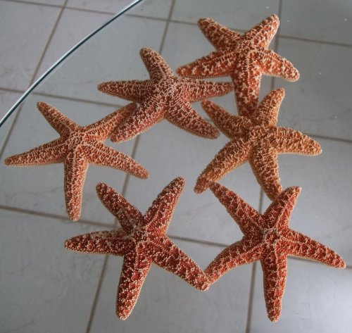 (Brown Sugar Starfish 3