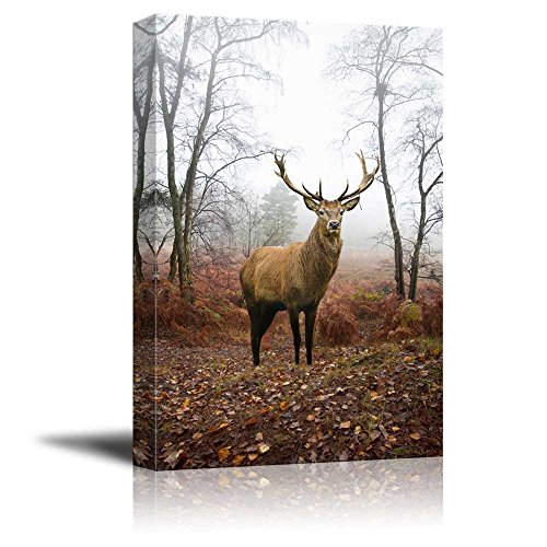 Beautiful Red Deer Stag in Foggy Misty Forest Landscape in Autumn Fall Wall Decor