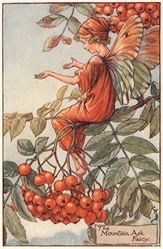 Mountain Ash Fairy by Cicely Mary Barker. Autumn Flower Fairies, print c1935 Antiqua Print Gallery