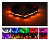 Blazin Collar de Perro LED de Seguridad – USB Recargable con luz Intermitente Resistente al Agua, Halloween, Pequeño