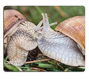 Mouse Pad Natural Rubber Mousepad IMAGE ID: 27570667 Edible snail common names the Burgundy snail Roman snail or escargot
