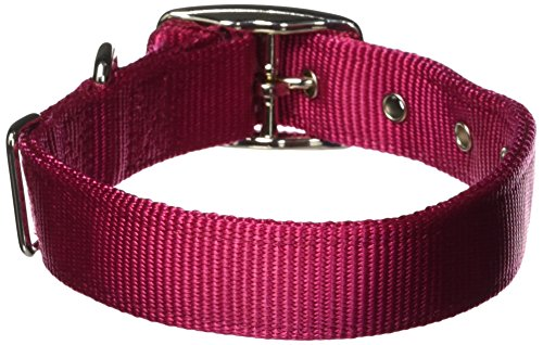 Hamilton Double Thick Nylon Deluxe Dog Collar, 1-Inch by 18-Inch, Raspberry