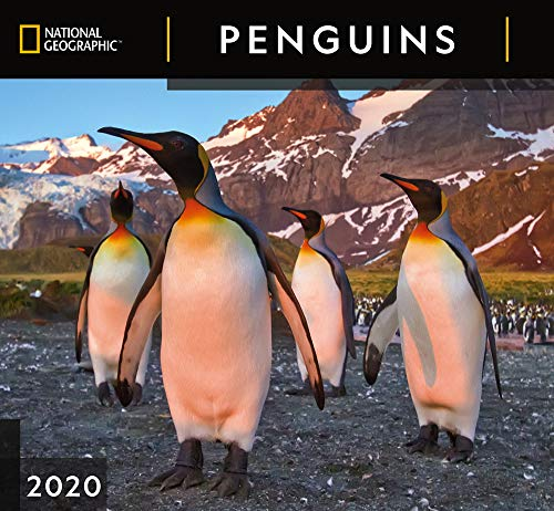 National Geographic Penguins 2020 Wall Calendar by Zebra Publishing