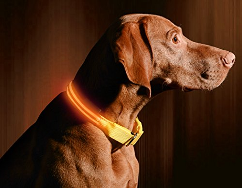 LED Dog Collar, USB Rechargeable, X-Small (9 - 13.7