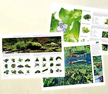 Neu Der Neue Dennerle Pflanzen Ratgeber 108 Seiten Mit über 400 Bild