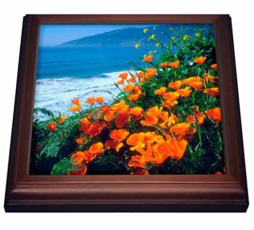 California Poppy Photo - 6