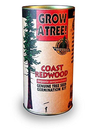 Jonsteen Company - Genuine Tree Seed Germination Kit - Coast Redwood