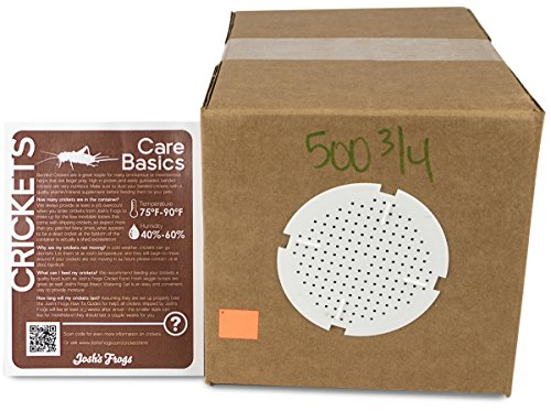 """3/4"""" Banded Crickets (500 Count)"""