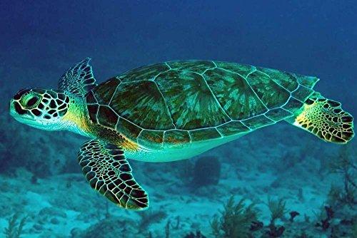 F.Mints Sea Turtle - E - Art Print Poster,Wall Decor,Home Decor(24x16inches)
